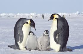 pinguin.jpg - 6.01 KB